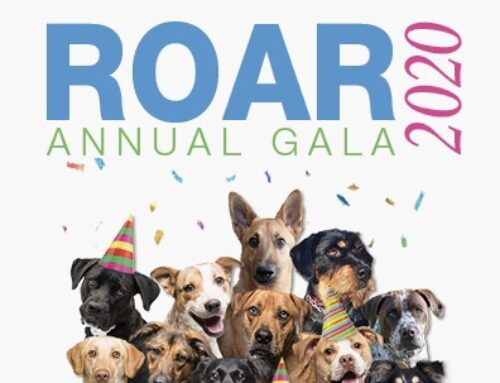 Are You Ready to ROAR With Us? – Our Annual Gala is Coming March 7! Click Here to Find Out More
