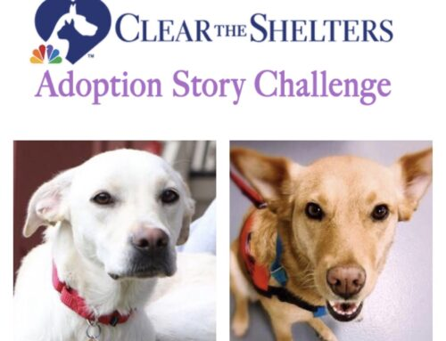 VOTE NOW for ROAR Dogs Elsa & Callie in the Clear the Shelters Adoption Story Challenge!