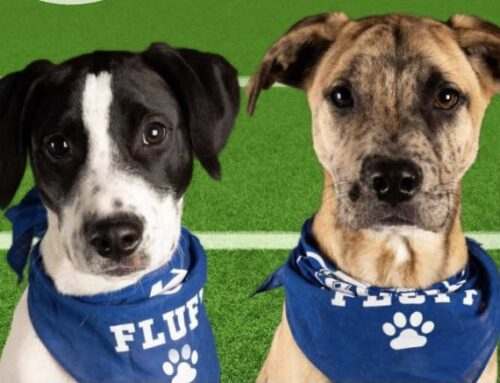 Cheer on ROAR's Moo & Hanson at this year's Puppy Bowl!