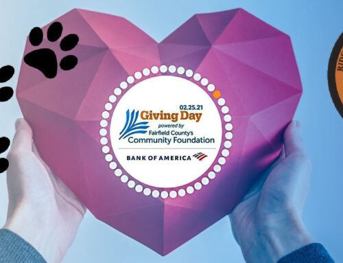 Today is Fairfield County Giving Day – Give Where You Live!